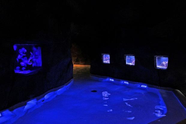 クラゲ風呂.jpg