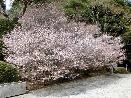 恩賜箱根公園.jpg